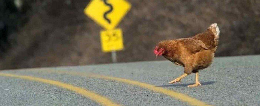 Типология психотипа на основе MBTI: Почему курица перебежала дорогу?
