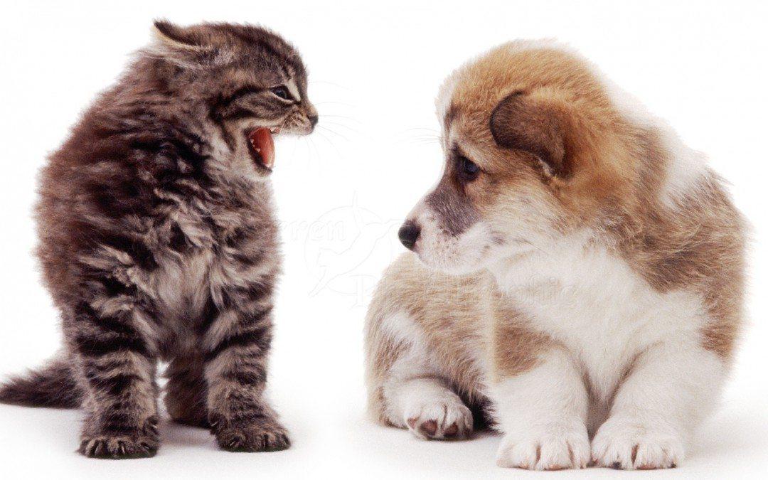 Нанимайте в стартап кошек, а в более крупный бизнес — хорошистов