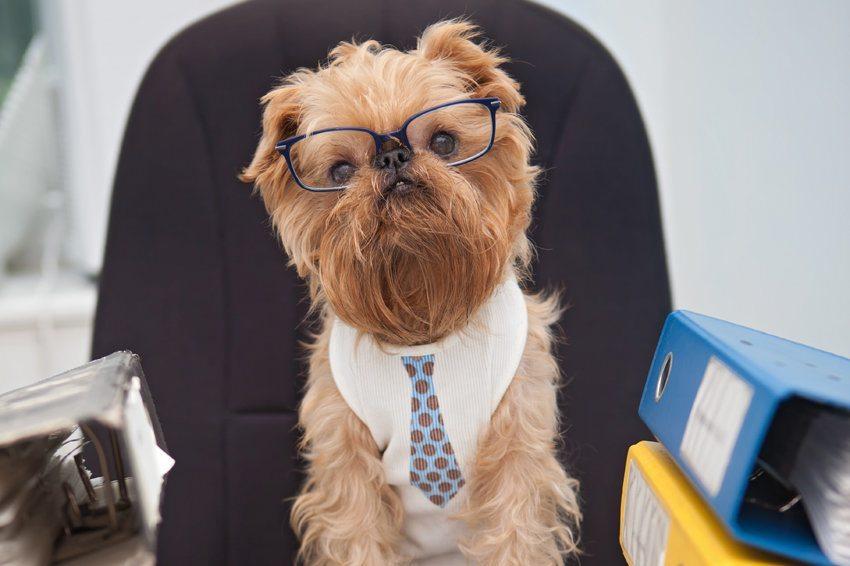 В России сотрудникам разрешили приходить на работу с собаками