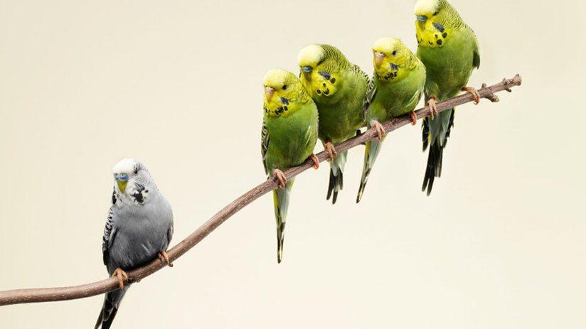 Проблема №1: как нанять идеального сотрудника и не нанять проходимца